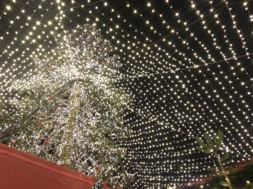 a view from below the cathedral market christmas tree and lights